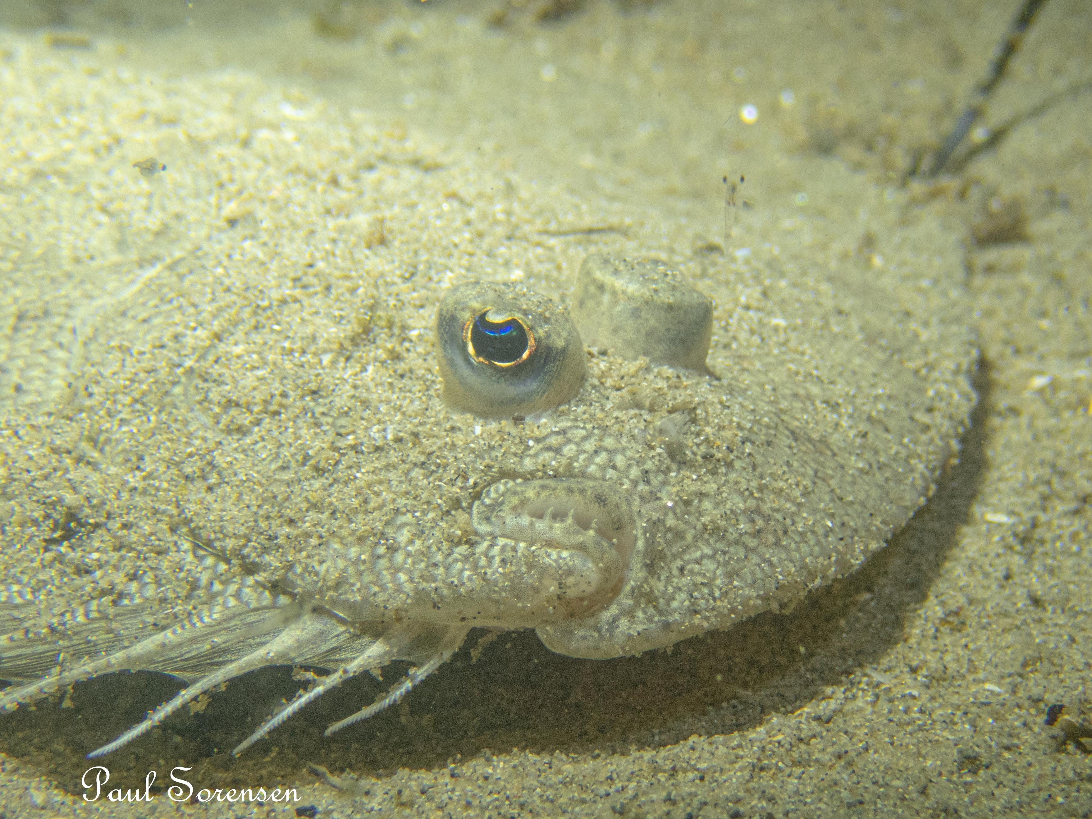 Wednesday 03.02.2021 Night Dive